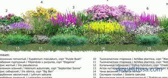 Cvjetnjak uz ogradu: pravila uređenja krajolika